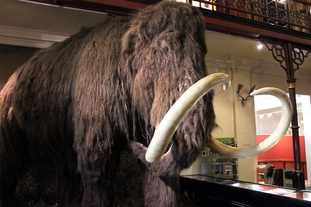 Image result for prehistory ipswich museum